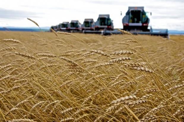 Государство может за 3-4 года выделить аграриям РФ около 137 млрд руб